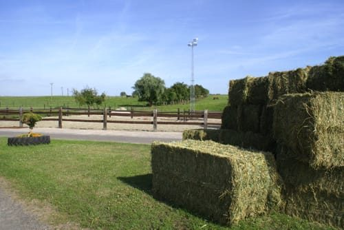 Pension pour cheval - Belgique