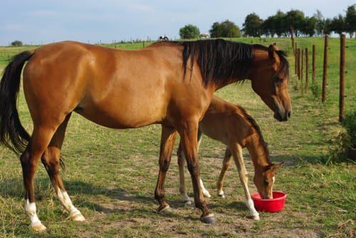Pension pour cheval - près de Jurbise
